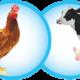 Mẫu đơn xin xác nhận kinh doanh giống vật nuôi