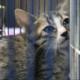 Bắt trộm mèo sẽ bị tội gì, tù bao nhiêu năm