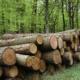 Hợp đồng mua bán gỗ tròn